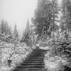 Steps near Paradise Lodge, Mt. Rainier Ntl Park.