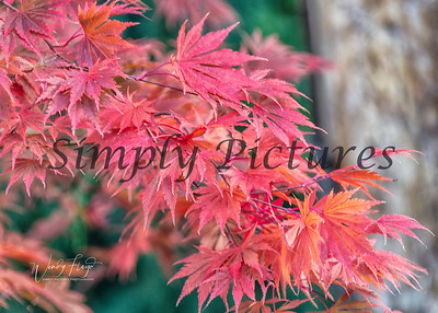 Foliage 1095