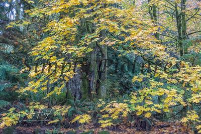 Foliage 1001