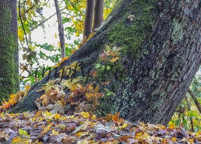 Foliage 0963