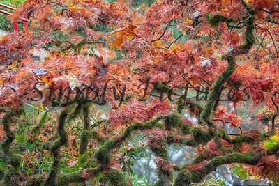 Foliage 1148