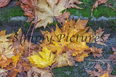 Foliage 0991