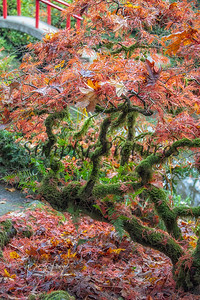 Foliage 1149