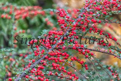 Foliage 1069