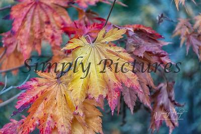 Foliage 1077