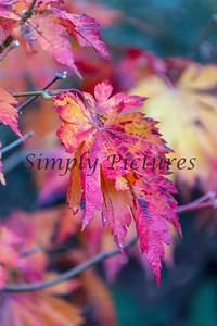 Foliage 1076