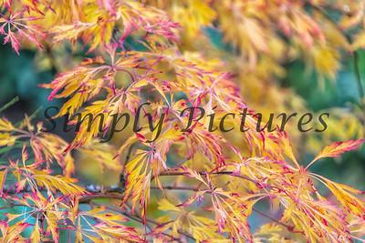 Foliage 1096