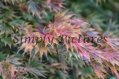 Foliage 1071