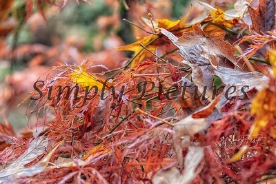 Foliage 1134