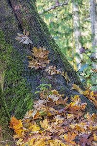 Foliage 0964