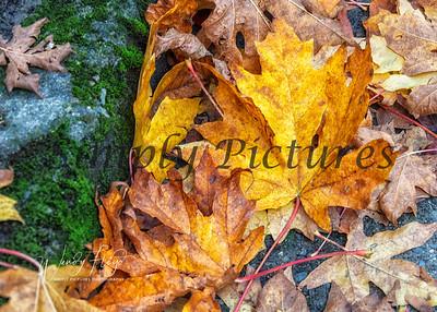 Foliage 0992