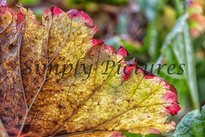 Foliage 1133
