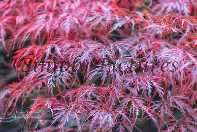 Foliage 1063