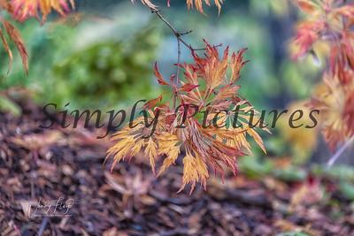 Foliage 1094