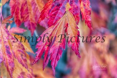 Foliage 1075