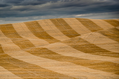 The Wheat Fields of the Palouse, After Harvest, in Southeastern Washington State