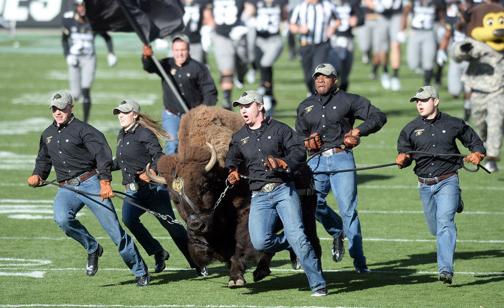 . BOULDER, CO: November 10: Here comes Ralphie during the game with Washington State. (Photo by Cliff Grassmick/Staff Photographer)
