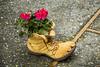 Decorative shoes and geranium flowers in La Conner, Washington, USA.