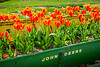 Orange tulips in an old decortive John Deere grain seeder in La Conner, Washington, USA.