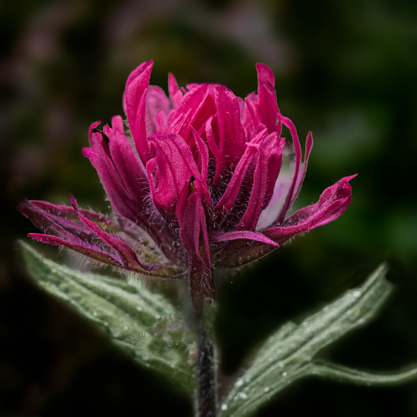 Red Paintbrush