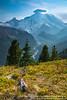 Silver Forest Trail, Mt. Rainier N.P.