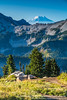 Paradise, Mt. Rainier N.P.
