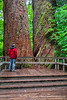 Grove of the Patriarchs, Mt. Rainier N.P.