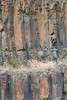 Columnar Basalt  -  Palouse Falls State Park