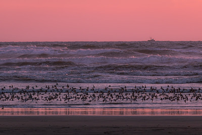 Waves and birbs at Ocean Shores Beach