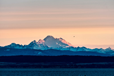 Mt. Baker Dawn