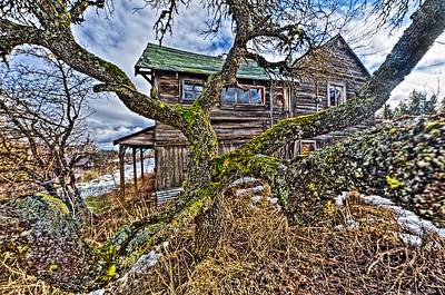 Roslyn Residence: dramatic tree and dilapidated house in Roslyn, Washington