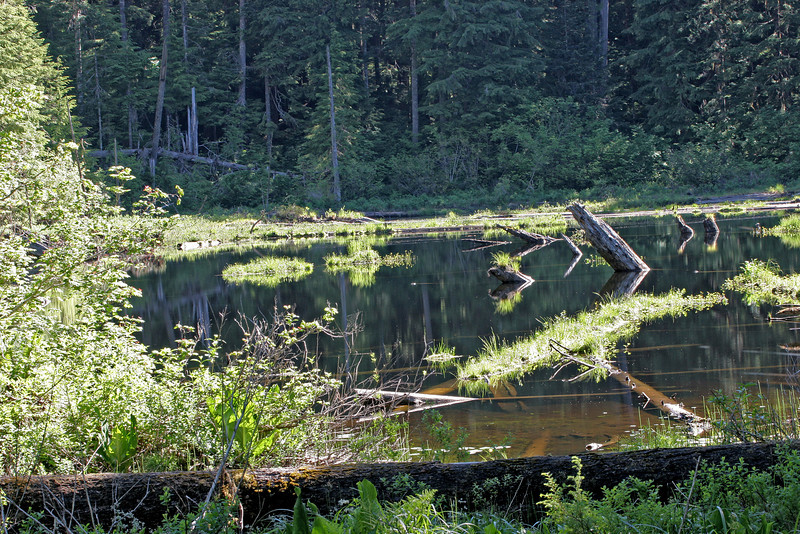 A hollow in the forest collects water making a still pond that contrasts to the rivers  frantic downhill rush nearby.
