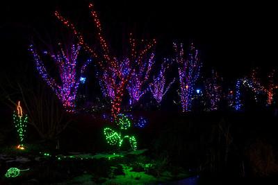 GardenFest of Lights at the Lewis Ginter Botanical Garden, Richmond, VA (New Years' Eve, Dec 31, 2010)