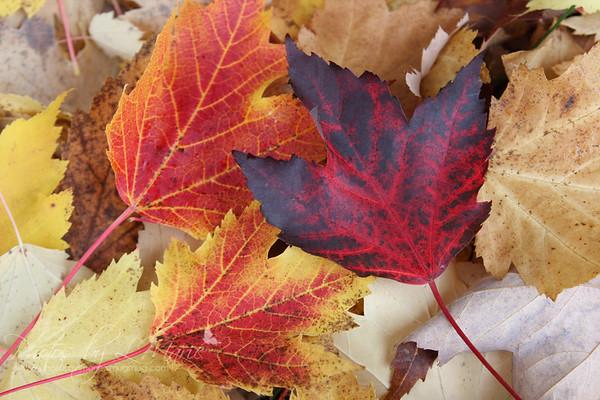 Autumn in Mill Creek