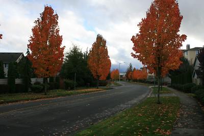 Cuckanut Drive