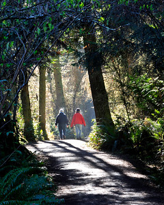 Trail leading to Dungeness Spit