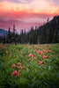 Kittitas, Bean Creek - Pink paintbrush in a meadow at sunrise