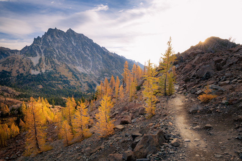 Stuart, Ingalls - Trail passing a stand of larch trees with Mt. Stuart in the background