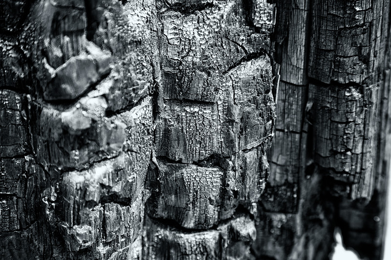 Leavenworth, Eightmile - Close up of burned wood from a past forest fire