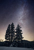 Kittitas, 29 Pines - Three tall pine trees with Milky Way