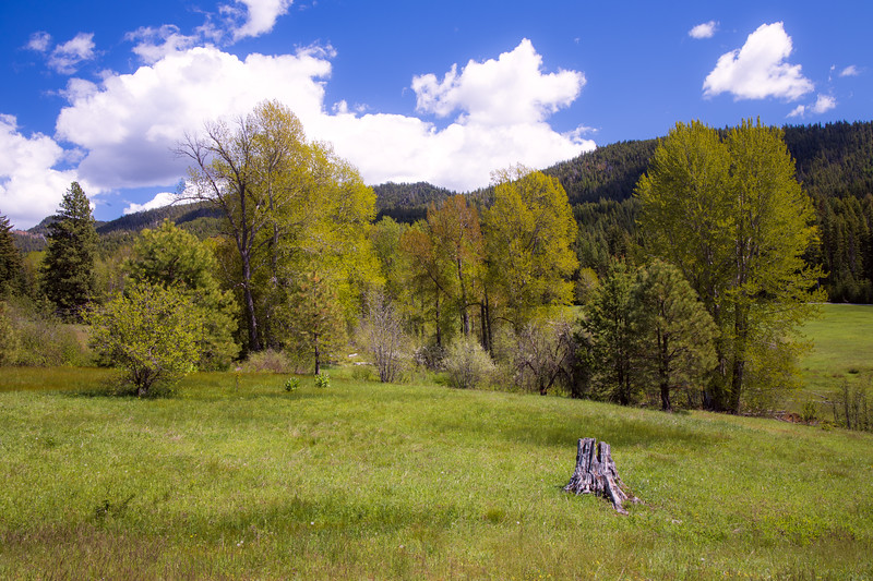Kittitas, Teanaway - Meadow with a log and trees under a blue sky