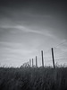 Kittitas, Watts Canyon - Lonely fenceline in a field of grass, black and white