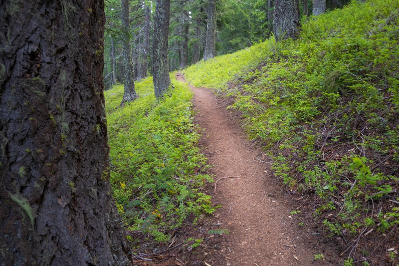 Kittitas, Mt. Baldy - Trail winding through a flat next to a large tree