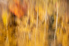Easton, Pond - Abstract of reflection of yellow and red fall colors in lake