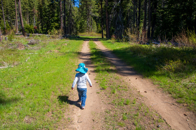 Kittitas, Teanaway - Little boy walking through forest on an old logging road
