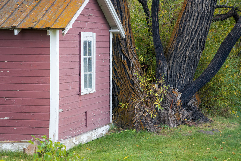Kittitas, Thorp - Old cottage against large tree