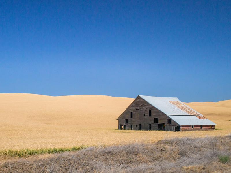 Palouse, Farm  - Abandoned barn in a yellow wheat field