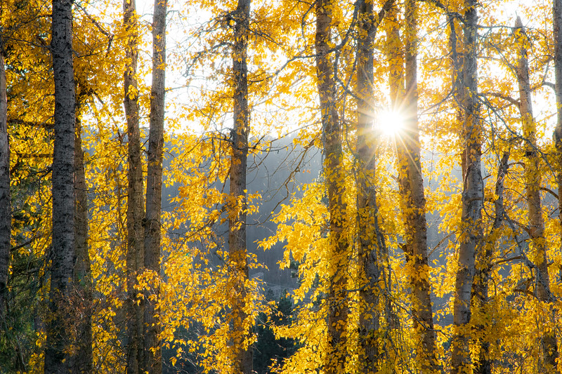 Easton. Pond - Sun star behind stand of yellow trees