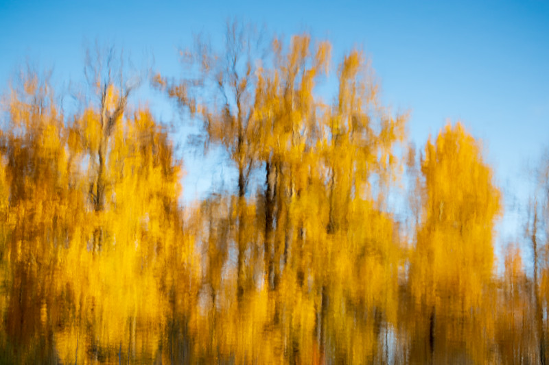 Easton, Pond - Inverted reflection of yellow trees in lake