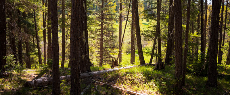 Kittitas, Teanaway - Light and shadows from a meadow at the edge of the forest